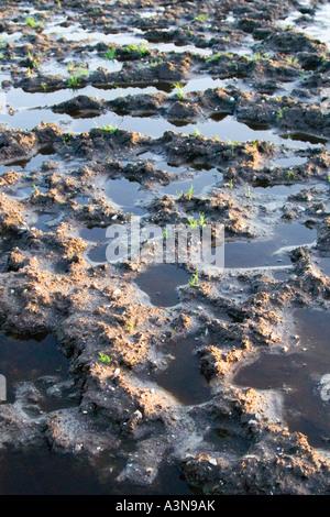 A muddy field. Waterlogged farm land southern England. Dorset. UK. Spring floods. New growth. - Stock Photo