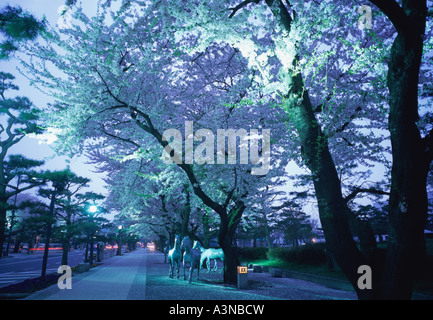 Treelined street with cherry blossoms - Stock Photo