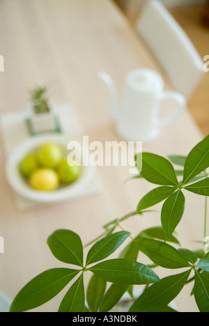 Green leaves with lemons on table in background - Stock Photo