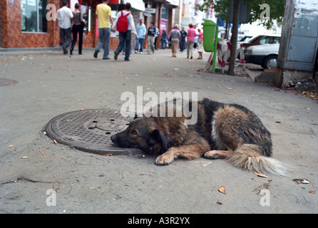 Straying dog on a sidewalk, Bucharest, Romania - Stock Photo