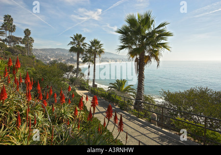 Aloe blossoming in Heisler Park, looking South toward the Main Beach Park, Laguna Beach, California, USA - Stock Photo