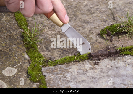 Gardener taking out weeds from between paving slabs using a garden knife - Stock Photo