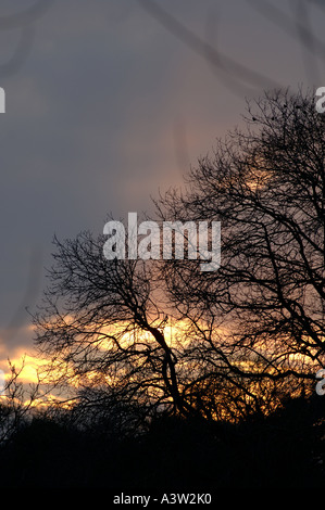 January sun setting behind winter clouds and bare tree branches - Stock Photo