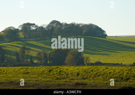 South Downs - Stock Photo
