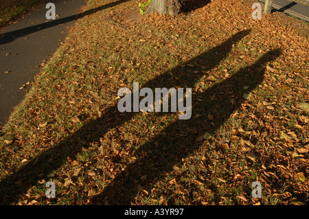 The autumn sun casts a shadow of a couple holding hands while walking across a path covered in fallen golden coloured - Stock Photo
