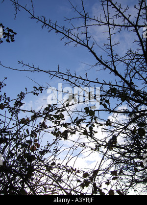 fence silhouette in countryside - Stock Photo