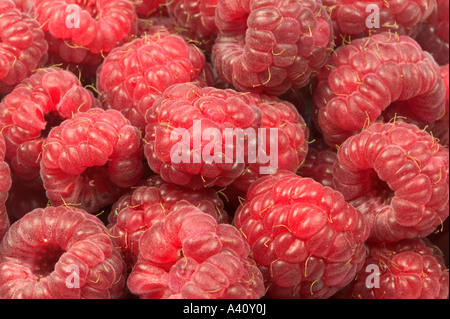 Raspberries macro filling the frame suitable for backgrounds - Stock Photo