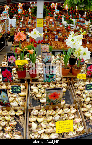 Flower stall in street market Amsterdam Holland - Stock Photo