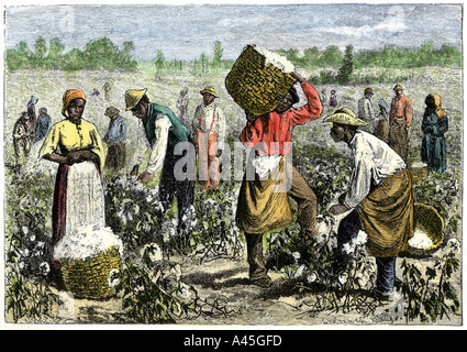 Afroamerican slaves picking cotton in the South. Hand-colored woodcut Stock Photo