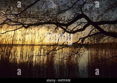 sunset at Grosser Teich, Germany, Saxony, Torgau - Stock Photo