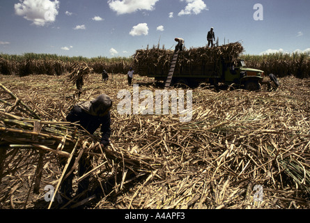 Philippines : sugar cane cutters at work on the Hacienda Luisita plantation,  President Cory Aquino's family estate, - Stock Photo