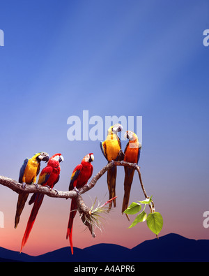 WILDLIFE:  Parrots sitting on a branch - Stock Photo