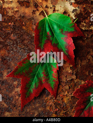 Early autumn leaves on a rusted sufrace - Stock Photo