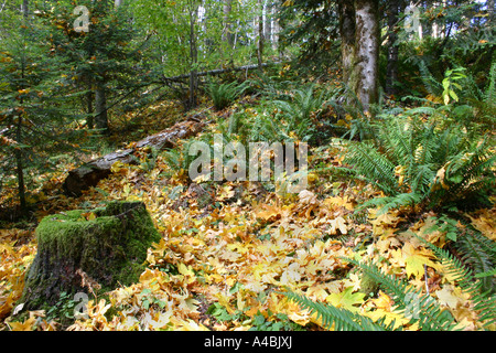 39,022.09346 Fall Forest Leaves on a Hillside with Stump Fall Forest Glade - An Inviting and Warm Place to Gather - Stock Photo