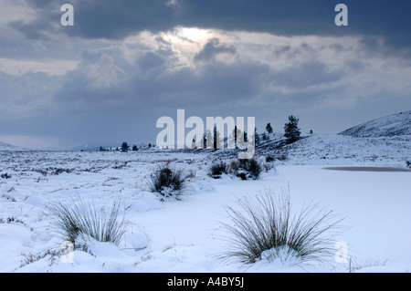 Winter time on Dava Moor Moray  XPL 4672-439 - Stock Photo