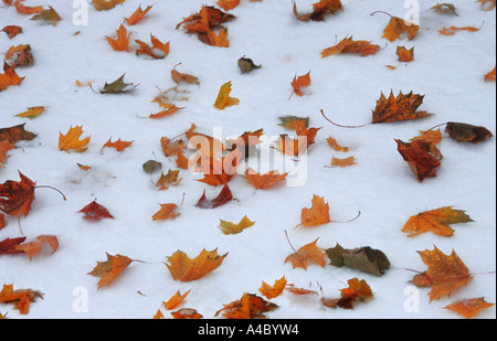 New York City Central Park Autumn Leaves Resting on the Snow after an early snowstorm. Central Park Conservancy - Stock Photo