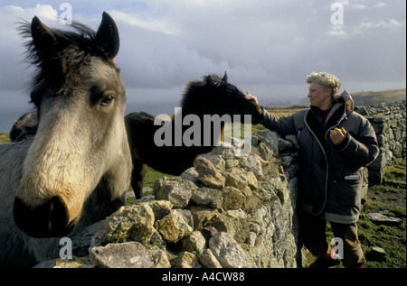 SMOKESTOP' LUNDY ISLAND 1994, A SMOKESTOPPER WITH WILD LUNDY PONIES AT THE ADMIRALTY LOOKOUT. - Stock Photo