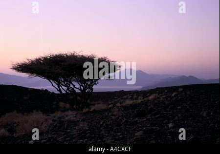 A lone tree stands by Assal Lake, a salt lake lying at  150 metres below sea level, Republic of Djibouti - Stock Photo