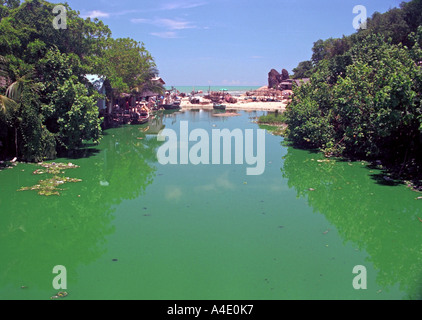 Polluted water at Kao Seng, a village south of Songkhla, southern Thailand. EA8 - Stock Photo