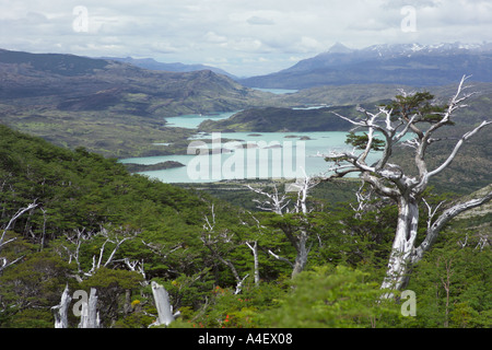 Forest above Lago Nordenskjold and Lago Pehoe in the Torres del Paine Patagonia Chile - Stock Photo