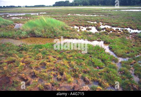 Mud flats tidal Butley creek Suffolk England - Stock Photo