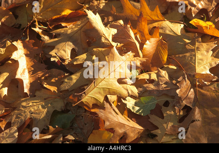 Golden Autumn leaves on ground - Stock Photo