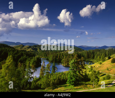 GB - CUMBRIA:  Tarn Hows in the Lake District National Park - Stock Photo