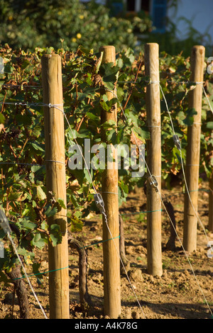 Vineyard at the house of gardening in Bercy area - Paris, France - Stock Photo