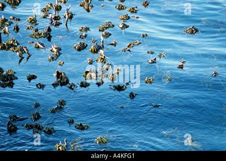 South Africa, seaweed growing in water