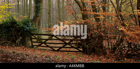 Old gate into wood in autumn - Stock Photo