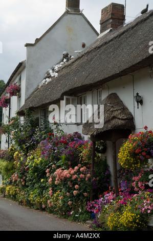 Doreen Hayes's Beautifully Kept 'Coombe Cottage', Village of Branscombe, Devon - Stock Photo