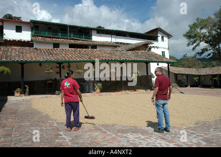 Coffee beans drying at a Venezuelan coffee plantation, Hacienda el Carmen, in the Andes mountains above Mérida - Stock Photo
