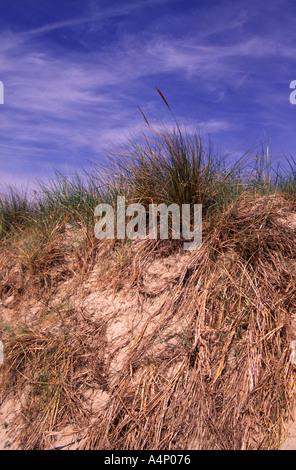 Sand dunes on the East Frisian Island of Langeoog, Germany - Stock Photo