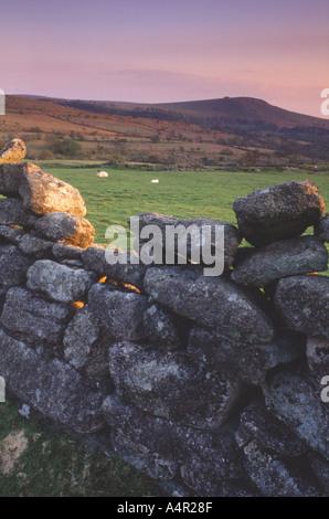 New born lamb and mother resting below Sheepstor Burrator Dartmoor UK - Stock Photo