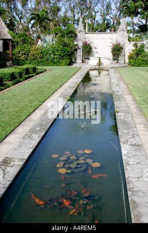 lily flower in little pond garden exterior leaves Golden fish aquarium tank animal fishes freshwater aquaria tropical - Stock Photo