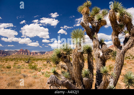 Red Rock Canyon State Park, Nevada, United States - Stock Photo
