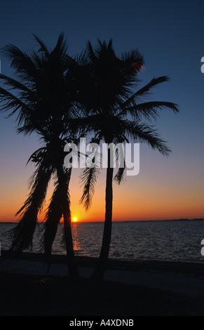 coconut palm (Cocos nucifera), two trees at dawn, USA, Florida, Sanibel Island - Stock Photo
