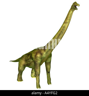 The brachiosaurus seemed also to arm lizard mentioned in the jurassic, had a weight of approx. 80 tons, a length - Stock Photo