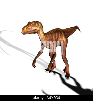 The Deinonychus occurred also terrible claw geannt in the lower Cretaceous period. The second foot toe approx. 13 - Stock Photo