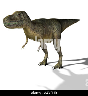 The Tyrannosaurus rex has its name of king of the Tyrannenechsen, in the Cretaceous period lived and a height of - Stock Photo