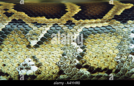 Skin of a snake