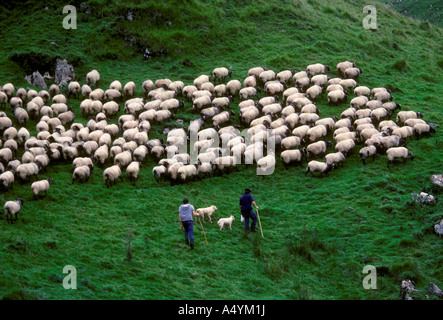 French Basque people person shepherds and dogs sheep grazing Pyrenees Mountains in the French Basque Country Esterencuby - Stock Photo