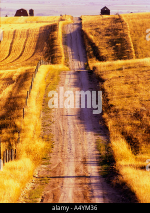 Rutted dirt road through harvested wheat stubble fields in late summer in the Gallatin Valley Montana USA - Stock Photo