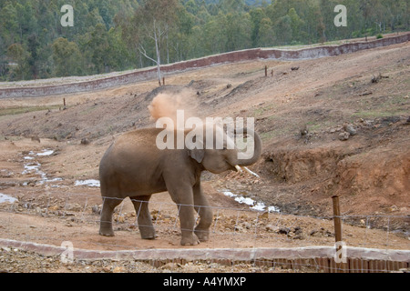 An Elephant Elphas Maximus at La Reserva Sevilla El Castillo de las Guardas the safari park in Seville - Stock Photo