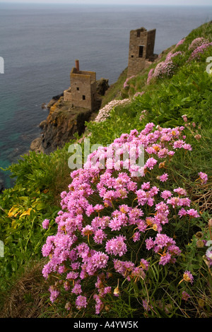 The Crowns engine houses Botallack Cornwall with thrift Armeria maritima in the foreground - Stock Photo