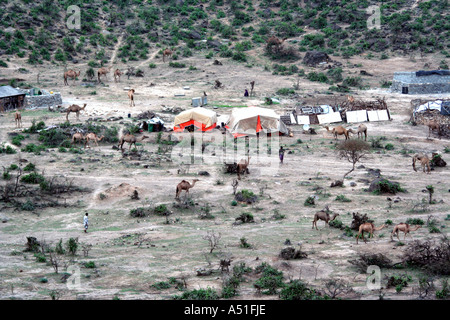 Khareef, Salalah , Oman, Camels and herders at camp in the mist during the rainy or monsoon season - Stock Photo