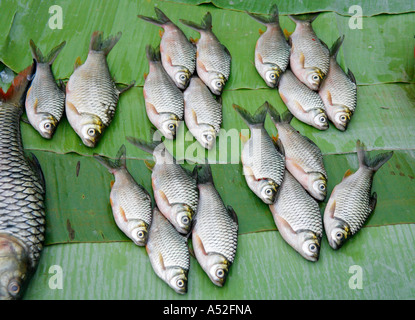 Stock Photo of Fish Arranged On Green Banana Leaves At a Market in Laos - Stock Photo