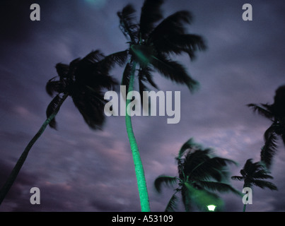 Palms in storm, Florida, USA - Stock Photo