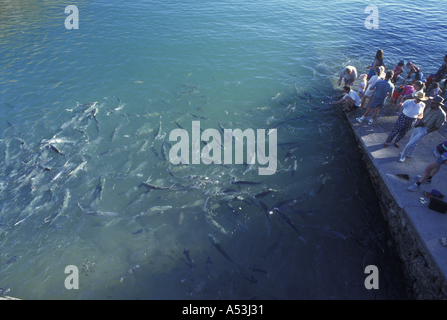 Australia Northern Territory Tourists feed fish at high tide at Doctor s Gully in Darwin - Stock Photo
