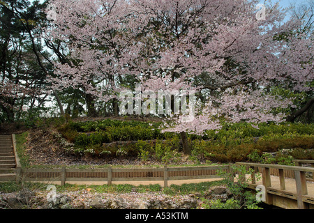 Japanese Garden Cherry Blossom Bridge tokyo japan travel sakura garden pink flower bridge landscape